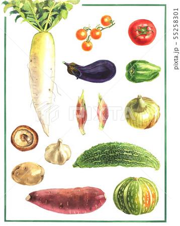 野菜 55258301