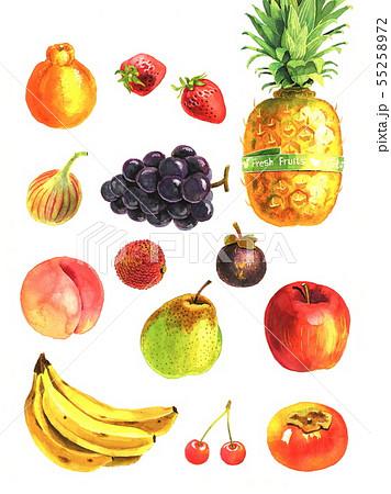 果物 55258972
