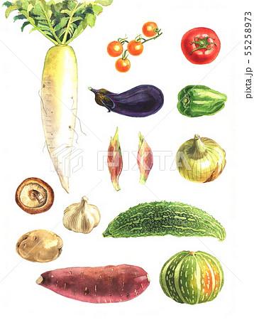 野菜 55258973