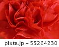 赤いカーネーション 55264230