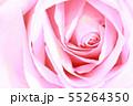 ピンクのバラ 55264350