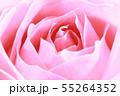 ピンクのバラ 55264352