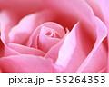 ピンクのバラ 55264353
