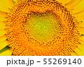 ひまわり畑 55269140