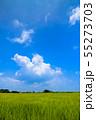 千葉県長生村の田園風景 55273703