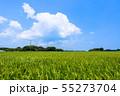 千葉県長生村の田園風景 55273704