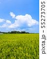 千葉県長生村の田園風景 55273705