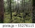 北八ヶ岳 白駒池周辺にある苔の森 55276115
