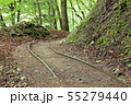 西沢渓谷 旧森林軌道 遊歩道 55279440