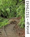 西沢渓谷 旧森林軌道 遊歩道 55279443
