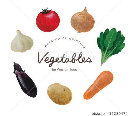 洋食向きの野菜水彩画 55289474