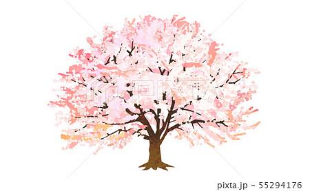 桜の木 55294176