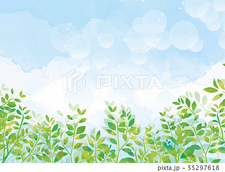 青空と緑の植物 55297618