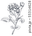 Hand drawn rose flowers branch isolated on white background. 55314628