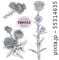 Vector collection of hand drawn Thistle or Carduus plant, leaf, bud and flower 55314635