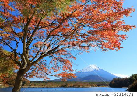 世界遺産 富士山 山梨 精進湖 紅葉 55314672