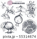 Vector collection of pomegranate fruits, flowers, branches. 55314674