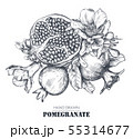 Vector composition of pomegranate fruits, flowers, branches. 55314677