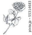 Hand drawn rose flowers branch isolated on white background. 55314683