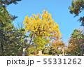 錦秋の京都御苑 55331262