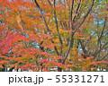 錦秋の京都御苑 55331271