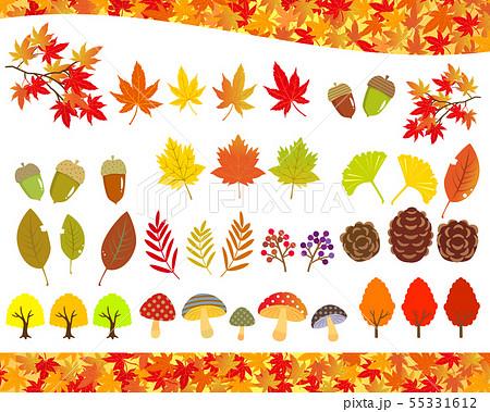 秋の植物 イラストセット 55331612