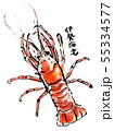 筆描き 魚介類 伊勢海老 55334577