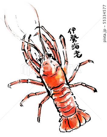 筆描き 魚介類 伊勢海老のイラスト素材