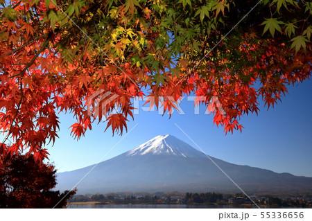世界遺産 富士山 山梨 河口湖 紅葉 55336656