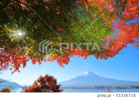 世界遺産 富士山 山梨 河口湖 紅葉 55336718