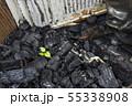 火事の跡に出てきた芽 55338908