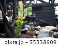 火事で焼け残った植物の発芽 55338909