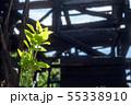 火事で焼け残った植物の発芽 55338910