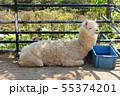 盛岡市動物公園、アルパカ 55374201