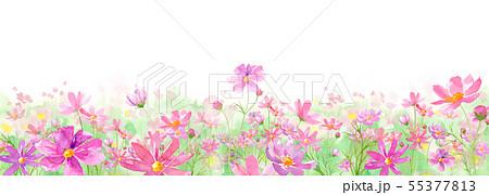 満開のコスモス畑の水彩イラスト 55377813