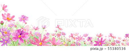 満開のコスモス畑の背景水彩イラスト アシンメトリー 55380536