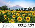 ひまわりと富士山 花の都公園 55384327