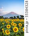 ひまわりと富士山 花の都公園 55384328