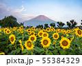 ひまわりと富士山 花の都公園 55384329