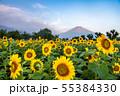 ひまわりと富士山 花の都公園 55384330