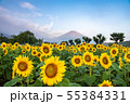 ひまわりと富士山 花の都公園 55384331