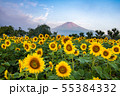 ひまわりと富士山 花の都公園 55384332