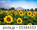 ひまわりと富士山 花の都公園 55384333