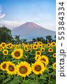 ひまわりと富士山 花の都公園 55384334