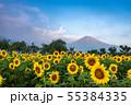 ひまわりと富士山 花の都公園 55384335