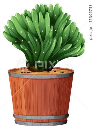 Plant in barrel pot 55396753