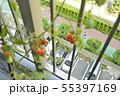 家庭栽培 ミニトマト ベランダ 完熟 階下の通行人 55397169