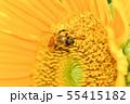 ひまわりにミツバチ 55415182