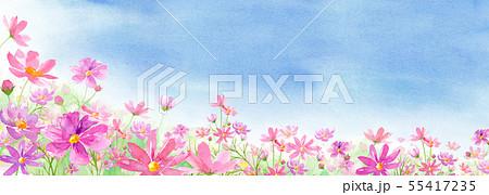 満開のコスモス畑と青空の背景アシンメトリー 水彩イラスト 55417235