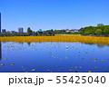 春の東京都上野公園の不忍池 55425040